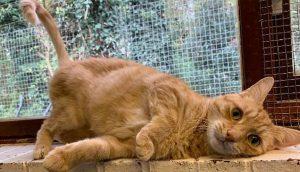 A un gatito le rompen definitivamente el corazón tras devolverlo por TERCERA vez al refugio