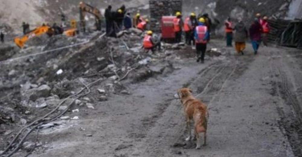 Perrita espera un milagro buscando desesperada a sus cachorritos en el desplome de un glaciar