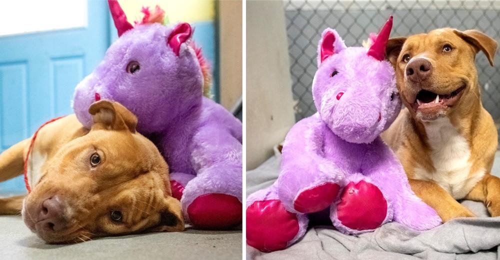 Un perrito que se escabullía en una tienda para robar un unicornio de peluche consigue un hogar