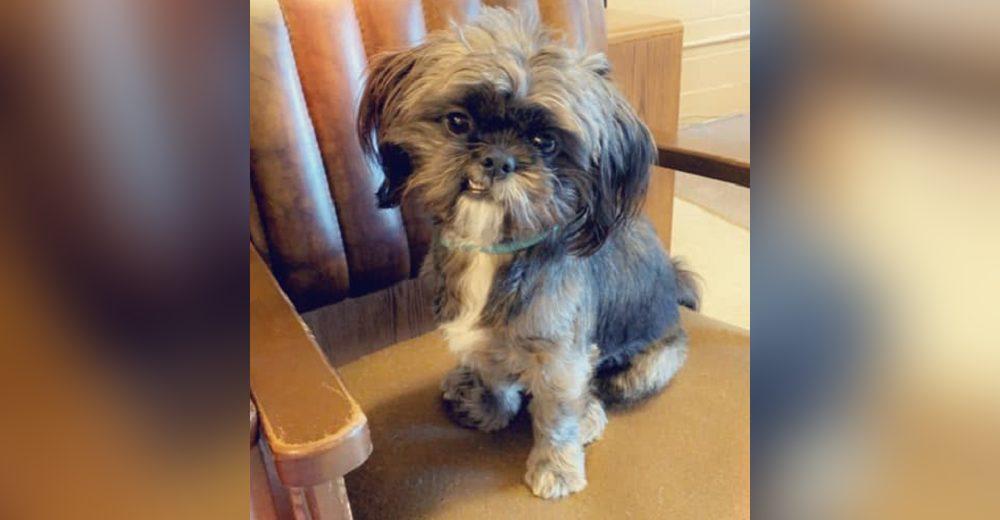 Denuncia a las niñas que presuntamente dejaron ciego a su perrito, pero la Policía no la escucha