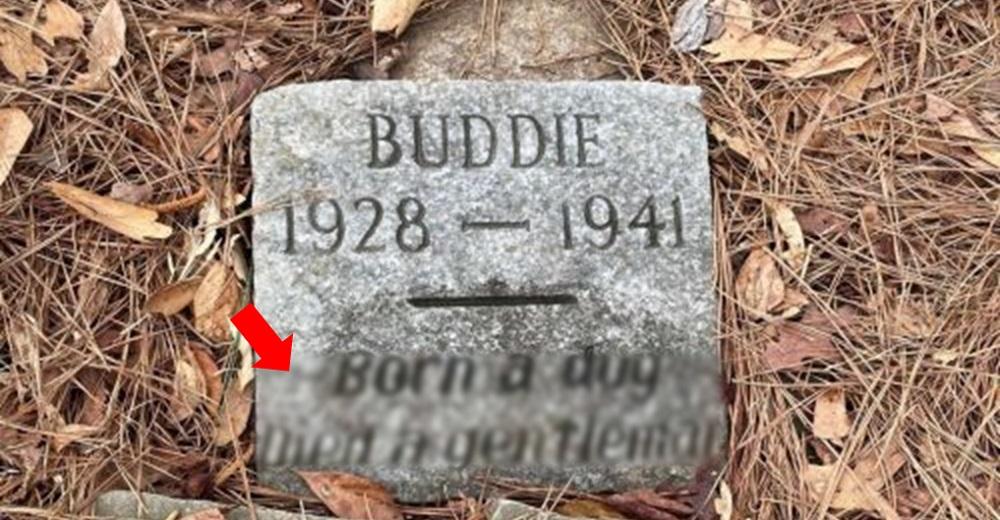 Un joven descubre la tumba de un perrito de 80 años que lo deja entre lágrimas