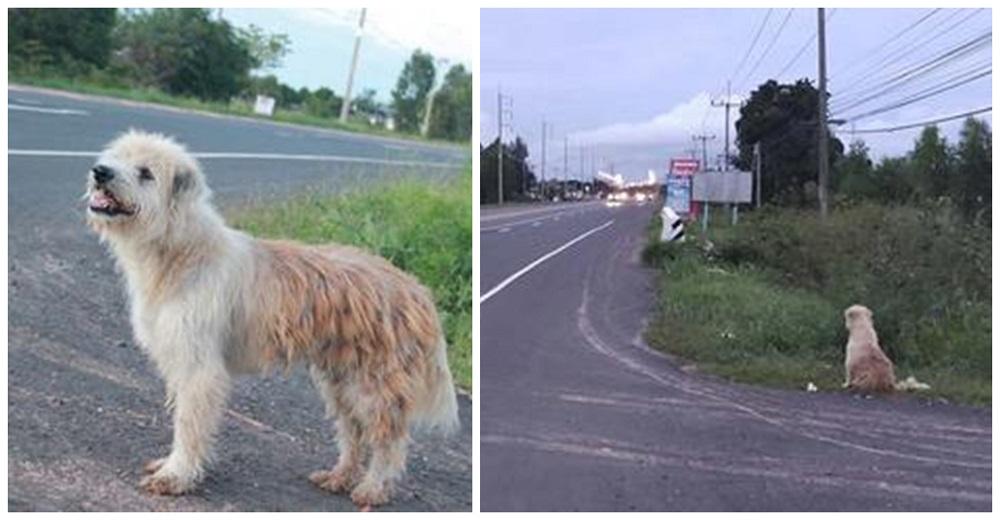 Un leal perrito se reencuentra con su antigua familia a la que esperó 4 años en una carretera