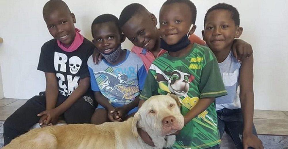 Cinco niños recogen a un perrito callejero moribundo y recorren kilómetros rogando por ayuda