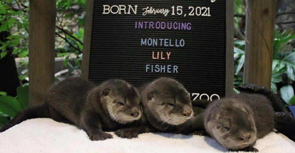 El histórico nacimiento de estos trillizos llena de orgullo a sus padres primerizos