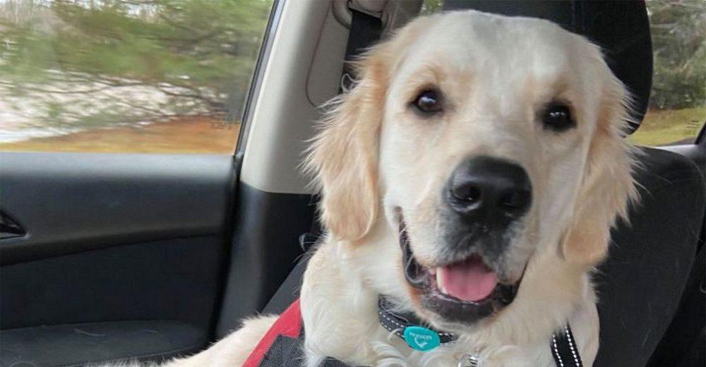 Una escuela suplica ayuda para salvar la vida del perrito de servicio que tanto aman