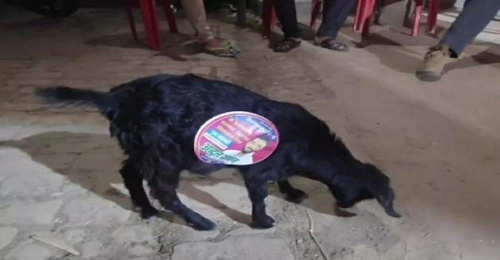 Captan a inocentes perritos callejeros siendo usados por políticos en sus campañas electorales