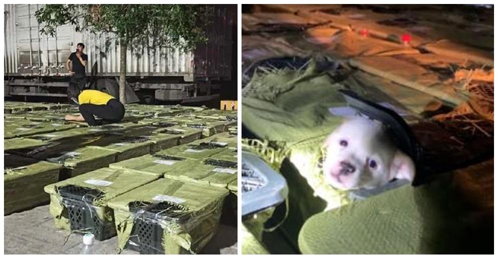 """Perros y gatos que murieron dentro de un camión revelan el drama de las """"cajas sorpresa"""""""