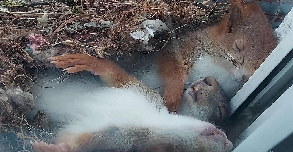 Joven encuentra a una mamá en su merecida siesta acurrucando a sus bebés justo en la ventana