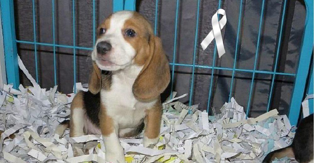Exigen justicia tras la muerte de un perrito a manos de su dueño que lo compró por Internet