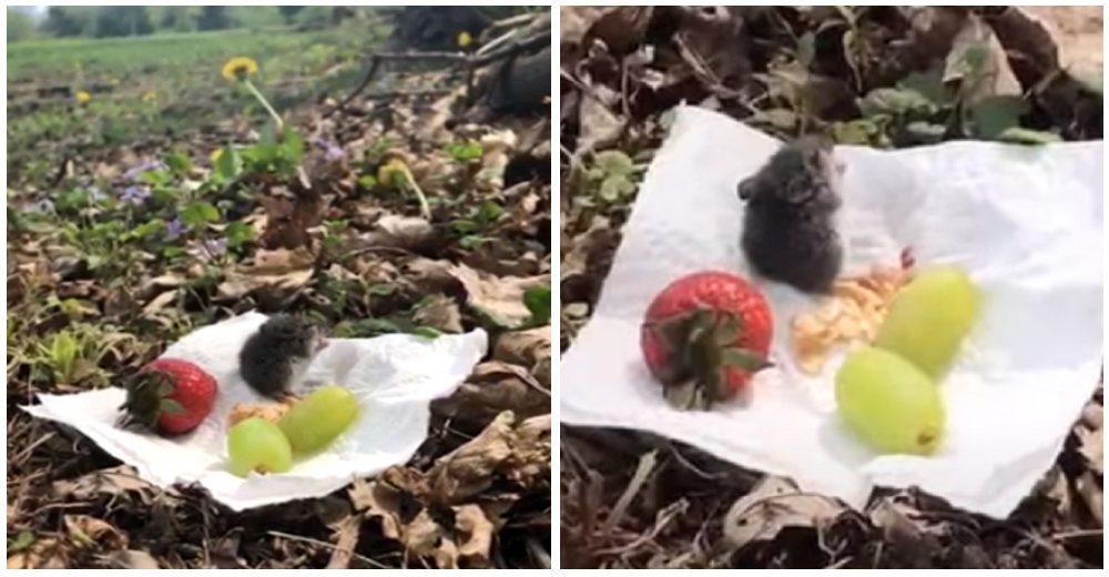 Una mujer salva la vida de un ratoncito, luego lo invita a un romántico picnic de despedida