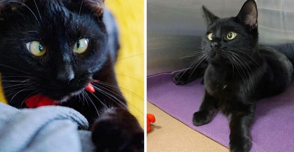 Un gatito bizco conoce la felicidad después de sobrevivir vagando en las calles