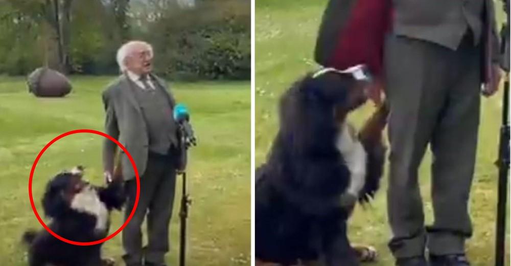 En plena rueda de prensa el perro del presidente lo interrumpe captando la atención de todos