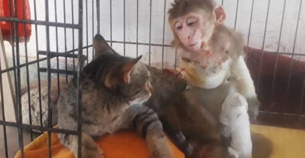Monita herida, rechazada y deprimida, recupera las ganas de vivir gracias a una gatita