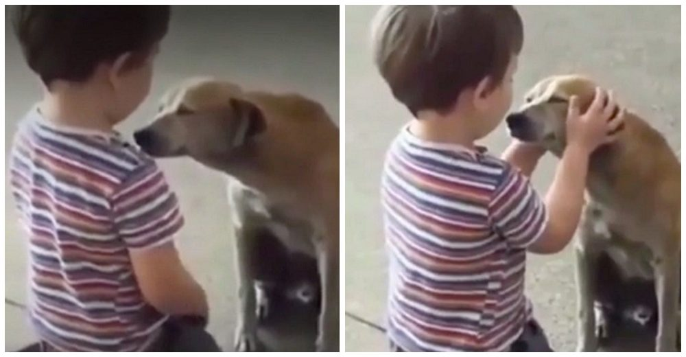 Graban la reacción de un niño cuando un perrito de la calle se le acerca pidiéndole ayuda