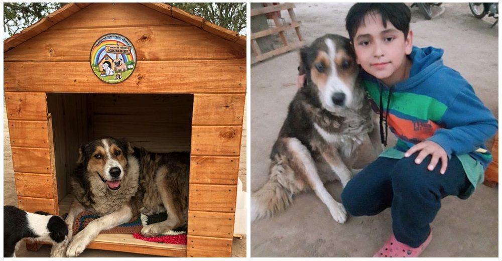 Tras años de desolación, un perro anciano logra que lo adopte el amiguito que hizo en la calle