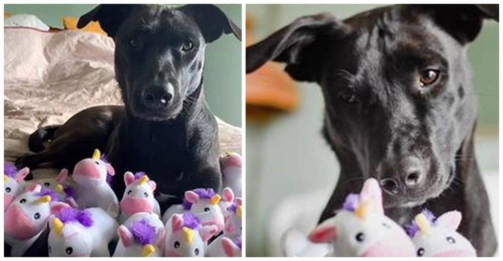 Perrita trata a los unicornios de juguete como si fueran bebés y recibe el mejor regalo