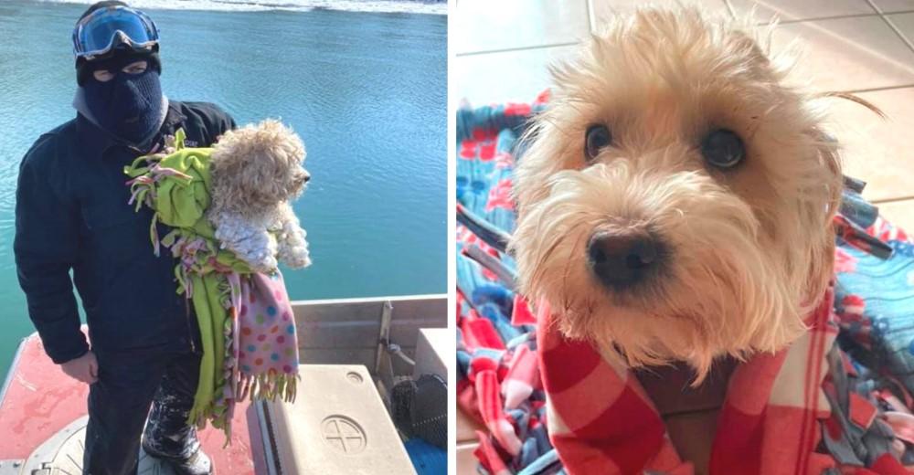 El perrito que estuvo atrapado 4 días en el río es adoptado por el hombre que salvó su vida