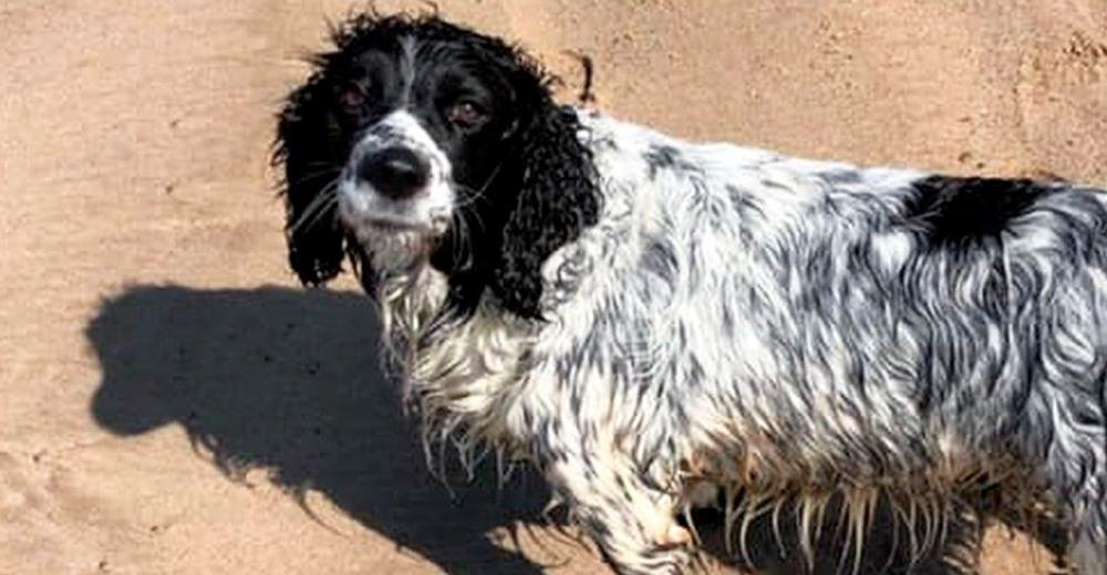 Encuentran al perrito que estuvo desaparecido durante 16 horas en el mar