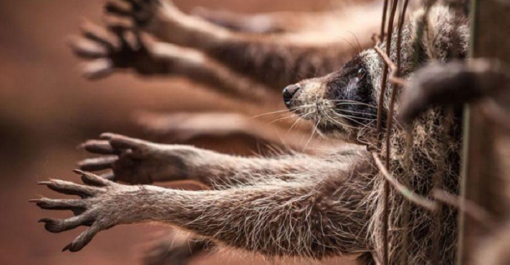 La reconocida marca Valentino renuncia a las pieles de animales tras 89 años de crueldad