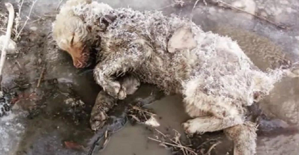 Llora al encontrar una perrita sin vida pero un débil aullido lastimero le devuelve la esperanza
