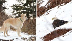 Una noble perrita sigue sus instintos y no se detiene hasta salvar la vida de un águila herida