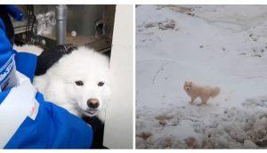 Con sus patitas congeladas una perrita que se perdió es rescatada en un peligroso glaciar