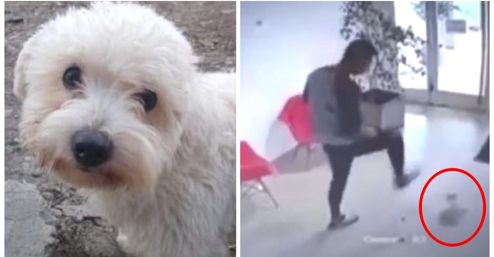 Un árbitro atenta contra la perrita de su novia sin saber que estaba siendo grabado