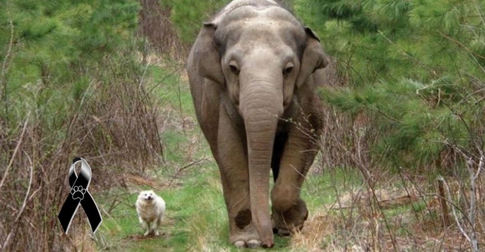 Bella y Tara, una perrita sin hogar y una elefanta, que fueron las mejores amigas hasta el final
