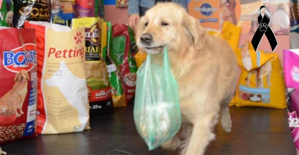 Muere Buddy, el perrito que llevaba en su hocico una bolsita con dinero para pagar su comidita
