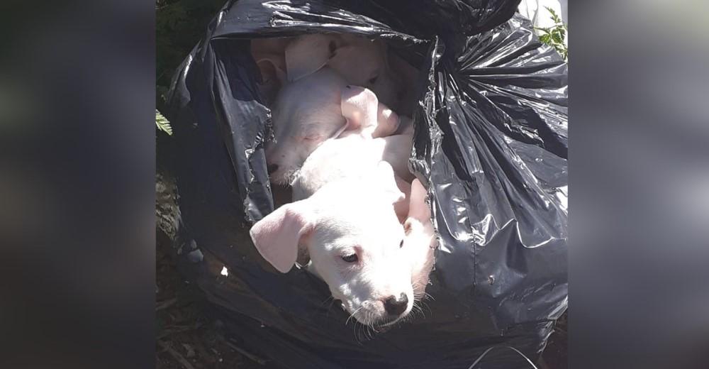 Desnutridos y afligidos hallaron a 8 cachorritos en una bolsa de basura atada