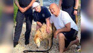 Exhausto nadando en una playa encuentran al perro que estuvo perdido durante 2 semanas