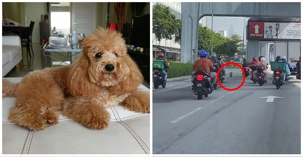 Desconocidos luchan por salvar a un perrito en grave peligro en media carretera