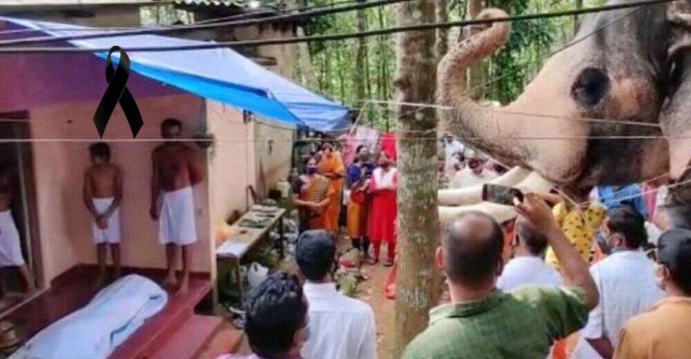 Elefante recorre 25 km para llegar al funeral de su cuidador, su viejo amigo de hace 20 años