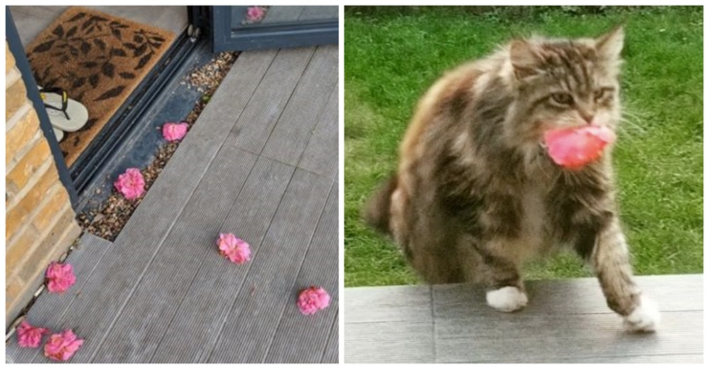 Mujer recibía siempre flores en su casa hasta que descubre a su admiradora secreta, una gatita