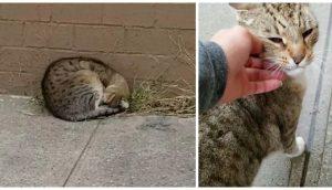 Gatito acurrucado junto a una pared rogaba que a su vida llegara la persona indicada