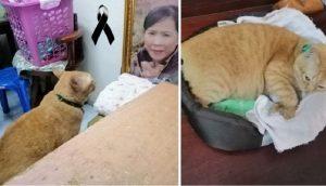Gatito llora cada noche frente a la foto de su dueña fallecida, quisiera poder abrazarla
