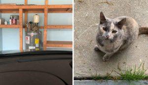 Mujer compra una casa y se da cuenta que de viene con un gato incluido