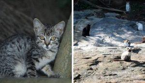 Rescatistas se cuestionan si deben seguir alimentando a gatos abandonados en una isla remota