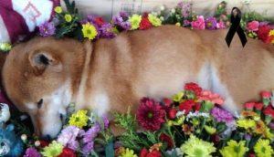 El último adiós al perrito que atendía solito un local de patatas dulces, sus clientes lo lloran
