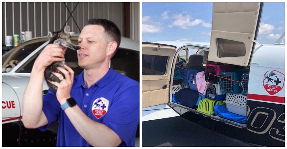 Piloto lleva a bordo más de 50 gatitos callejeros en un arriesgado vuelo en helicóptero