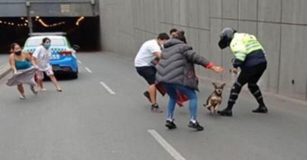 Perrita desata épica persecución en la ciudad obligando a la Policía a paralizar el tránsito