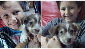 Con 7 años salva a un perrito de las manos de otros niños, lo lleva al veterinario y lo adopta