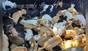 Hallan a decenas de animales sobreviviendo en deplorables condiciones en casa de una anciana