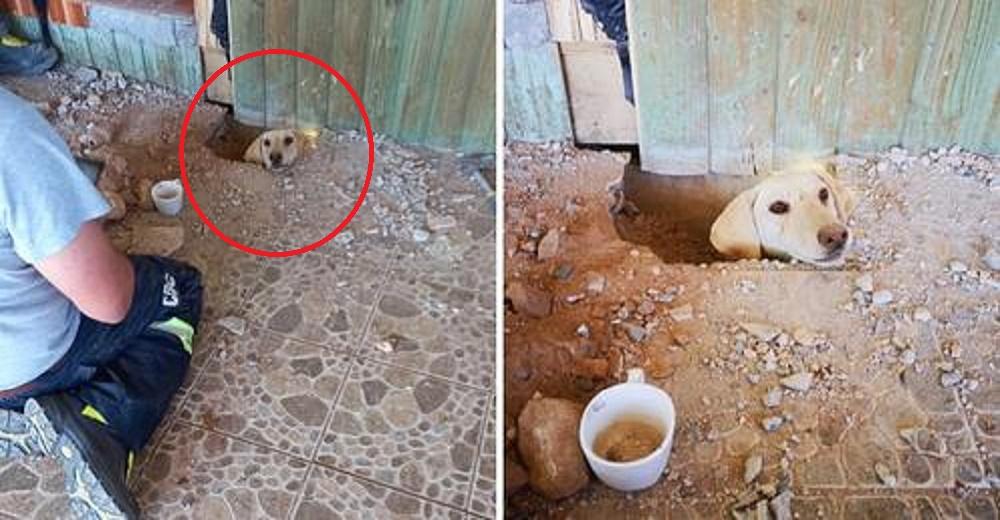 Abre un hoyo en el suelo y asoma su cabeza suplicando ayuda tras días atrapado bajo una casa