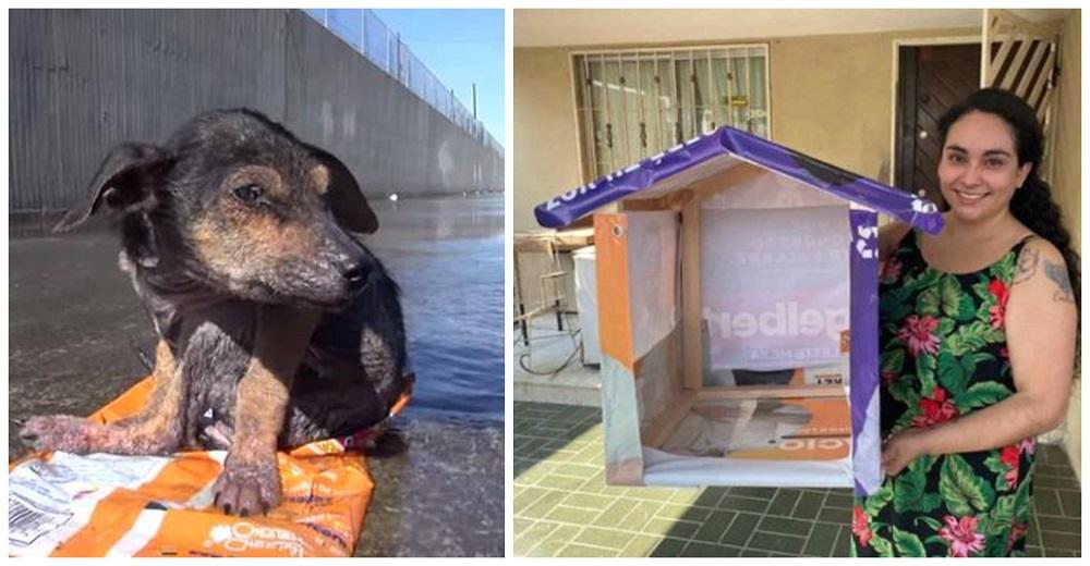 Recicla la basura electoral y la convierte en casitas para animales vulnerables de la calle
