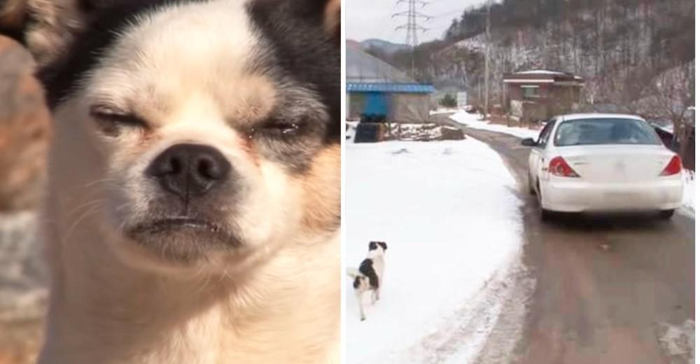 Un perrito persigue autos con la ilusión de encontrar dueño sin saber que está abandonado