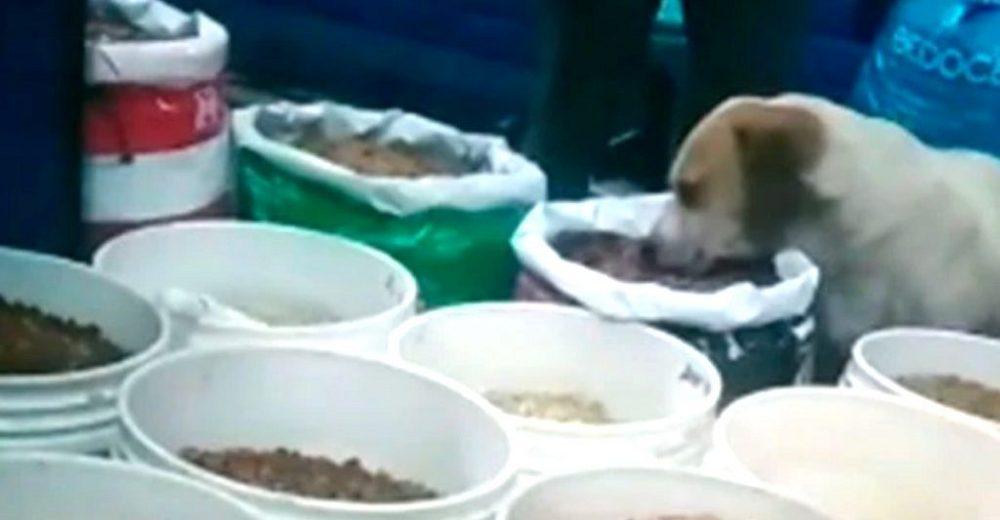 La dueña de una tienda atrapa a un perro callejero devorando las croquetas sin permiso