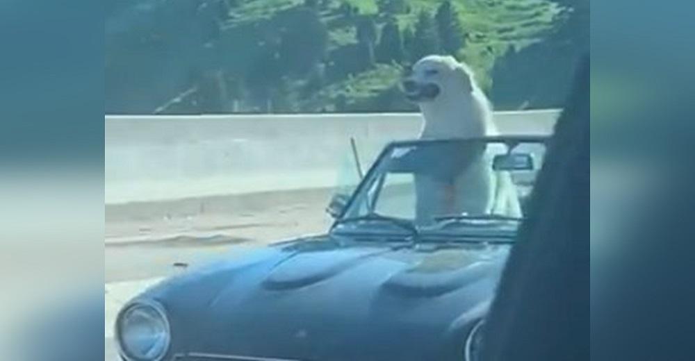 Una mujer conduce en carretera y el perrito copiloto del coche de al lado la hace morir de risa