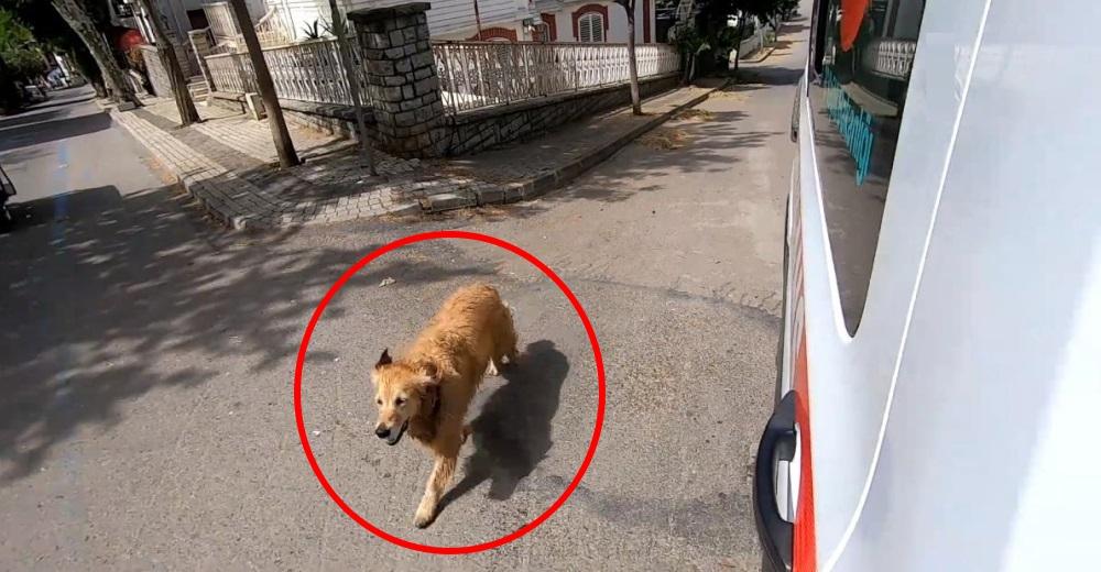 Corre desesperado detrás de la ambulancia en la que llevan a su dueña al hospital