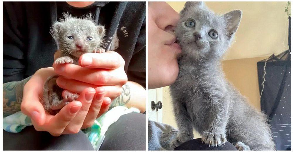 Alimenta con sonda a la gatita que cabía en la palma de una mano y ahora es una belleza felina
